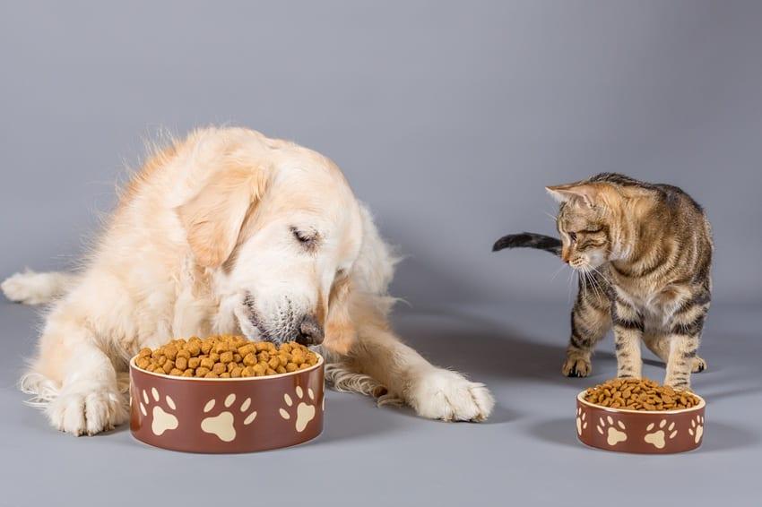 Dog & cat eating together