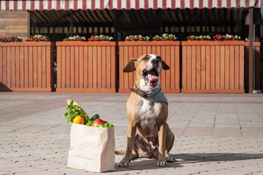 Vegan Dog