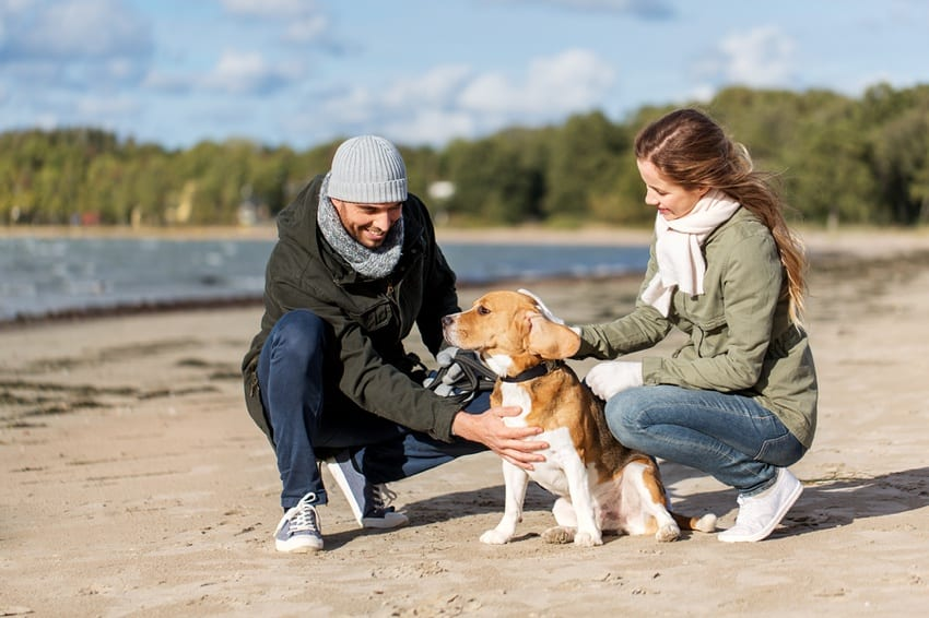 Couple with their rescue Beagle