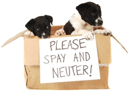 The important of spaying & neutering