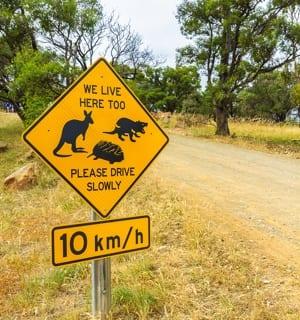 Road Crossing in Tasmania