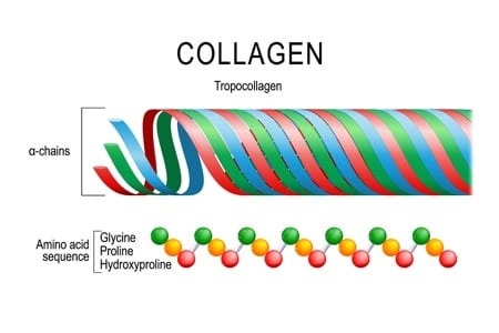 Collagen Molecular Structure