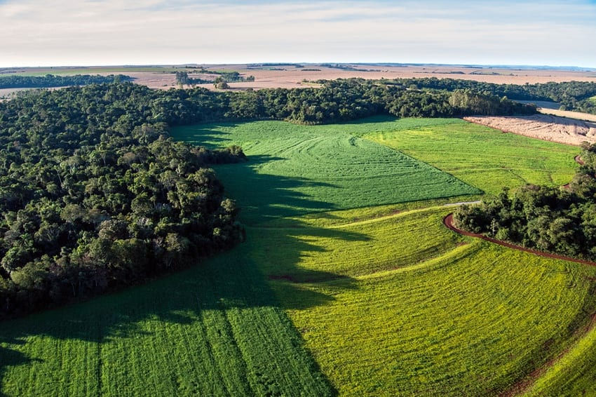 Deforestation of rainforests for soy bean fields