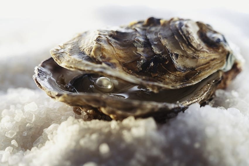 Fresh oyster with pearl inside