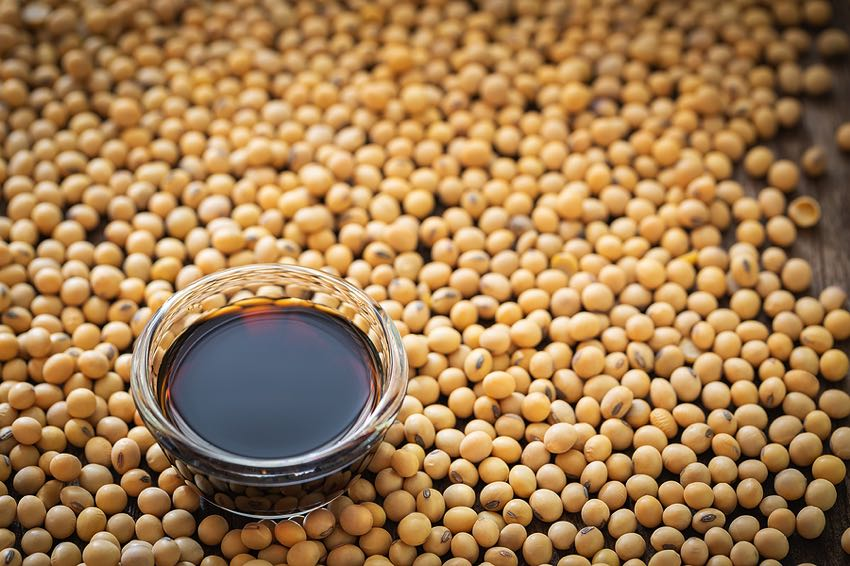 Soy sauce with soy beans