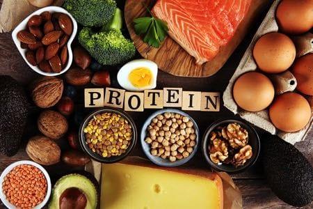 Plant vs Animal Protein