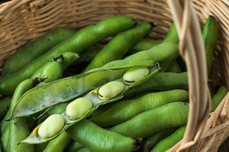 Fava beans in basket