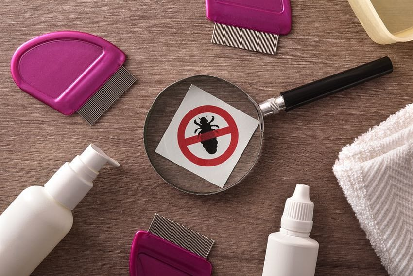 Lice comb, shampoo, lotion and other treatment